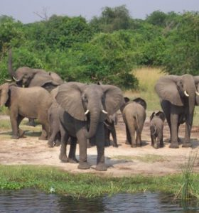 national-parks-in-Uganda-10