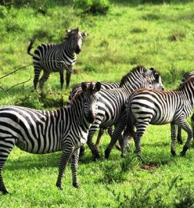national-parks-in-Uganda-11