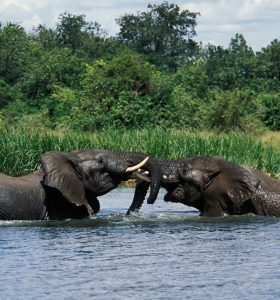 national-parks-in-Uganda-9